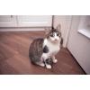 Кошка Марфа ищет дом!