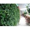 Курс Вертикальное озеленение