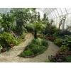 Озеленение интерьера.  Зимние сады