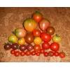 Семена томатов редких и коллекционных сортов