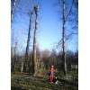 Удаление деревьев любой сложности аккуратно и оперативно