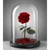 Вечная роза в колбе - не вянет до 5 лет