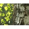 Обрезка плодовых деревьев,  расчистка и благоустройство участков,  обработка от клещей,  покос травы,  обработка от сорняков